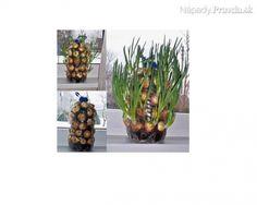 Pestovanie cibuľky na balkóne alebo okne