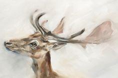 Fallow Deer by Julie Brunn