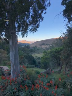 The Cavern Resort & Spa in the Drakensberg just gave us one of our best family holidays yet. It was a beautiful holiday for all five of us and here are 10 reasons why they get it all so right f… Resort Spa, Mountains, Travel, Beautiful, Viajes, Trips, Traveling, Tourism, Bergen