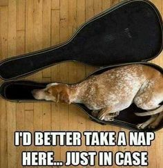 Dog Thinks It's a Guitar Dog Pictures, Animal Pictures, Funny Pictures, Hilarious Photos, Animals Photos, Dog Photos, Videos Funny, Funny Dogs, Funny Animals