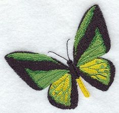 Ornithoptera Goliath Procus Butterfly design (M2158) from www.Emblibrary.com