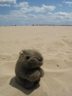 plush wombat on google+