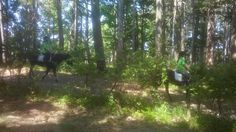 Pony, Trunks, Plants, Green, Pony Horse, Drift Wood, Planters, Ponies, Plant