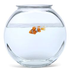 I really can't keep fish alive, but I love them. I should get this. Robo Fish - Lifelike Robotic Pet Fish