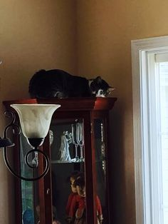 I walked into the den, and caught Myrle sleeping on top of my curio.