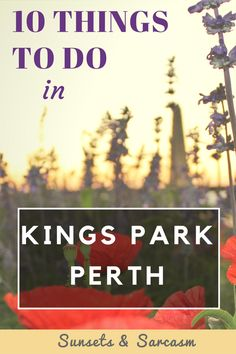 Guide to Kings Park Perth, Australia. Discover Botanic Gardens, walking trails, cafes and spectacular sunset views across Perth city and the Swan River in Western Australia. Moving To Australia, Australia Travel, Australia 2018, Travel Expert, Travel Advise, Travel Tips, Travel Goals, Travel Guides, Kings Park Perth
