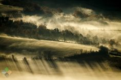 Foggy day - foggy landscape in the countryside