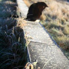 Tidig december frost i Henån. Foto av Selma Karlsdottir http://www.selmakdesign.se/category/konst-foto/