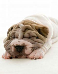Cutest dog