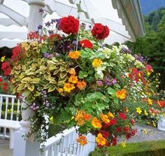 6 Top Notch Summer Annuals To Use In Hanging Baskets….love the colors #containergardeningideashangingbaskets