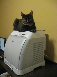 Cat owns printer