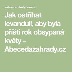 Jak ostříhat levanduli, aby byla příští rok obsypaná květy – Abecedazahrady.cz