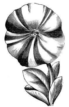 Vintage Floral Clip Art - Petunias - The Graphics Fairy #Printable #Vintage #Floral