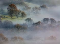 Trees in the fog down Hope Valley, View from Mam Tor, Peak D