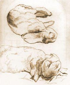 Rabbit drawings by Beatrix Potter