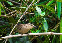 Aves do Cerrado - Palmas/TO