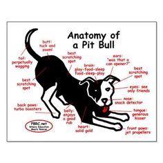 the anatomy of a pit bull