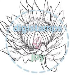 Protea - Click Image to Close Watercolor Projects, Watercolor And Ink, Painting Patterns, Fabric Painting, Drawing Sketches, Art Drawings, Protea Art, Lino Art, Mini Canvas Art
