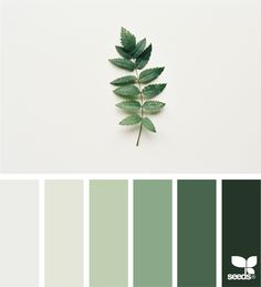 Nature Tones via @designseeds #seedscolor #color #colorpalette #color #palette #pallet #colour #colourpalette #design #seeds #designseeds #leaf #green