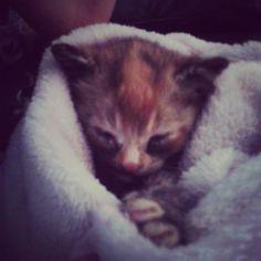 Baby Rajah