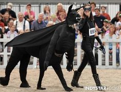 This Is A Llama Dressed Up As Batman. Your Move, Affleck.