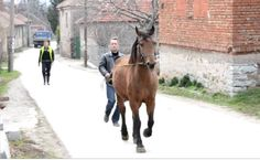Cura the Horse Runs With Her Hero Through Village Streets