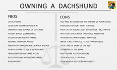 'The Pros & Cons of Owning a Dachshund'.     But who are we kidding, they're all pros ; )