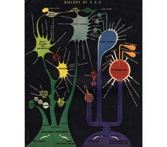 Biology of C.S.C. (1944)