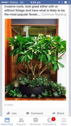 Apartment Patio Garden Ideas Succulent Planters New Ideas Garden Pool, Terrace Garden, Rockery Garden, Balcony Gardening, Balcony Plants, Backyard Patio, Concrete Patios, Tropical Landscaping, Tropical Garden