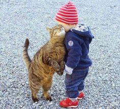 13 Gatos que simplesmente amam seus humanos