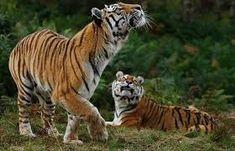 Image result for Highland Wildlife Park