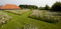 landschapstuinen wortel Meadow Garden, Sensory Garden, Beautiful Gardens, Garden Landscaping, Garden Design, Minimalism, Golf Courses, Planting, Gardening