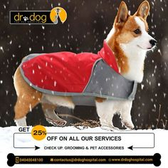 Dr Dog Hospital is only 24 Hr & No 1 Pet multipolarity hospital in Hyderabad aims to offer smiles by providing best treatment to all breads of pet Dogs, Cats. Over 7 years, we assessed needs and always provided high quality veterinary services (surgeries, consulting, medicines, pet diet & care both in-patient & Home visit. Our team of expert Veterinary doctors always round the clock to shower all the love and care to your loved one need. We are proud to be No 1 Pet Hospital. Veterinary Surgeon, Veterinary Services, Dental Services, Small Animal Hospital, Pet Hospital, Pet Dogs, Dog Cat, Pet Clinic