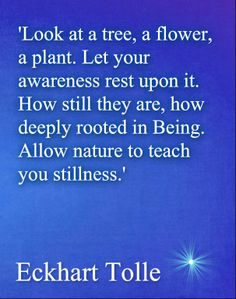 'Look at a tree, a flower, a plant. Let your awareness rest upon it. How still are they, how deeply rooted in Being. Allow nature to teach you stillness. Eckhart Tolle Wisdom