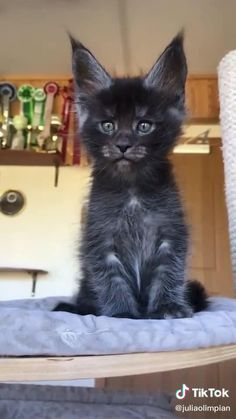 Kittens And Puppies, Cute Cats And Kittens, Kittens Cutest, Pretty Cats, Beautiful Cats, Animals Beautiful, Cute Baby Dogs, Baby Cats, Cute Little Animals