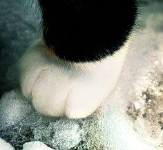 How adorable .......... Paws down on the ground!!!!