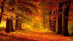 Autumn Path Red Walk Foliage Fall Trees