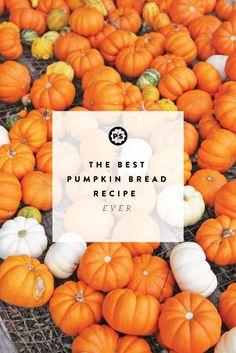 The best pumpkin bre