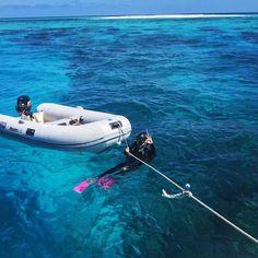 Tauchen im Great Barrier Reef  :) #australien #australia #aussi #oz #greatbarrierreef #diving #tauchen #scubadiving #cairns #meer #ocean #bluewater #klareswasser #enjoylife #pinkeflossen #travel #travelgram #instatravel #allaroundtheworld #urlaub #gönnen #mega #adventure #abendteuer #nemo #seegurke #clownfish #geilertag #turtle #schildkröte by hoiifly http://ift.tt/1UokkV2