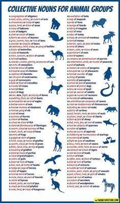 Collective nouns for animal groups - English vocabulary English Writing Skills, English Lessons, English Words, English Grammar, Teaching English, Learn English, English Language, Language Arts, Improve English