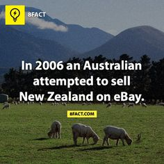 8fact Oh my word! That's kind of funny :)