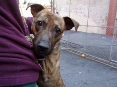 Manhattan NY.  Thomas.  Male.  4 yrs.   Dies in a.m.  See Urgent Part 2 on fb.***RESCUED***