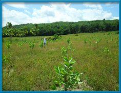 Reflexiones sobre la ruralidad y el territorio en Colombia: una reseña
