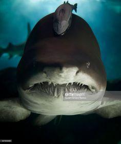 shark eye contact.