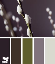 Catkin Color: Plum Purple, Brown Gray, Olive, Wisteria Purple and Cotton White