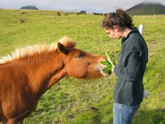 Pony munching dandelions