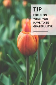 Feeling grateful might seem counterintuitive when you are grieving. But once you really look at the blessings in your life and the love that was there and all of the people that you have who are supporting you, feeling gratitude is hugely important to get you through the grieving process. - Ashley Davis Bush #loveliveson #experttips