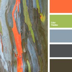 Color Palette #3206
