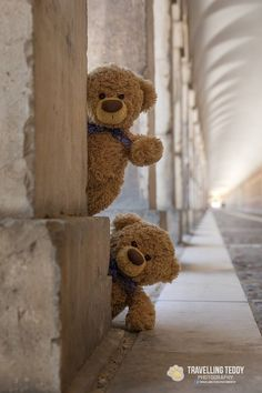 Shelby ~ Stunning Plush Bear By Charlie Bears ~ Such A Cutie! Bears Sophisticated Technologies Manufactured
