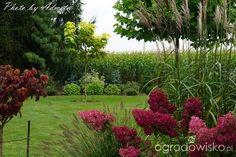 Hydrangea Paniculata, Garden Design, Home And Garden, Backyard, Plants, Gardening, Outdoor, Desks, Lawn And Garden